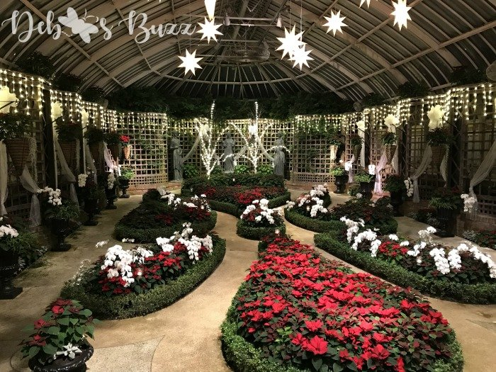 Phipps-winter-Christmas-flower