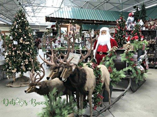 Visiting Trax Farms at Christmastime