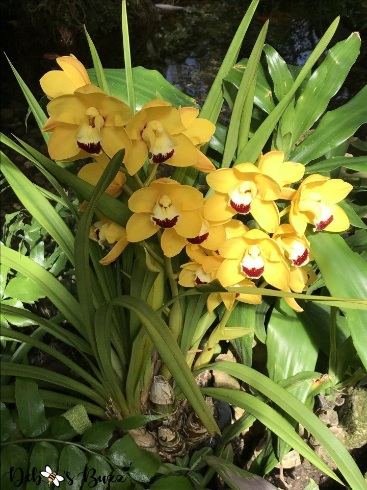 phipps-spring-flower-show-orchids-yellow