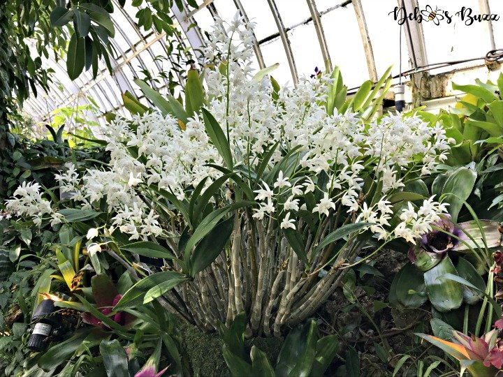 phipps-spring-flower-show-tiny-orchids