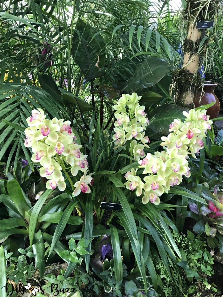 phipps-spring-flower-show-triple-orchid