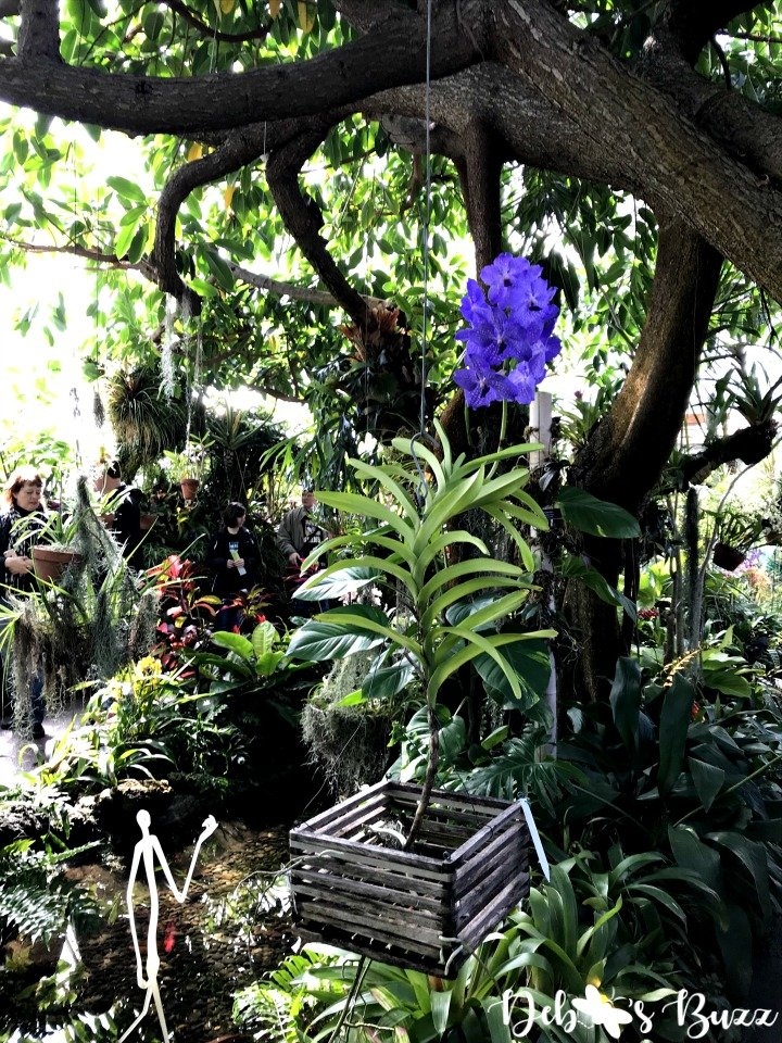 phipps-spring-flower-show-hanging-orchid