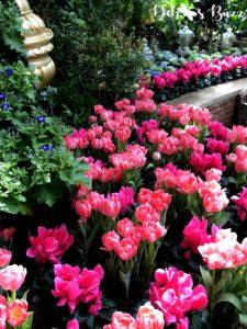 phipps-spring-flower-show-tullips