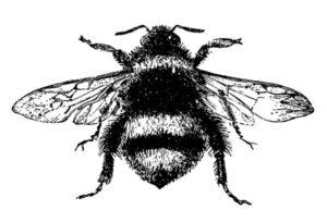 queen-bee-invitation-graphics-fairy-bee