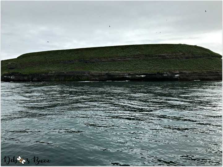iceland-journey-day6-husavik-puffin-island