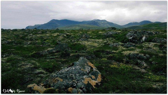 exploring-Iceland-day8-Berserkjahraun-moss-lava-field