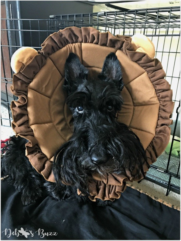 Scottie-dog-fuzzy-funny-Valentine-lion-cone