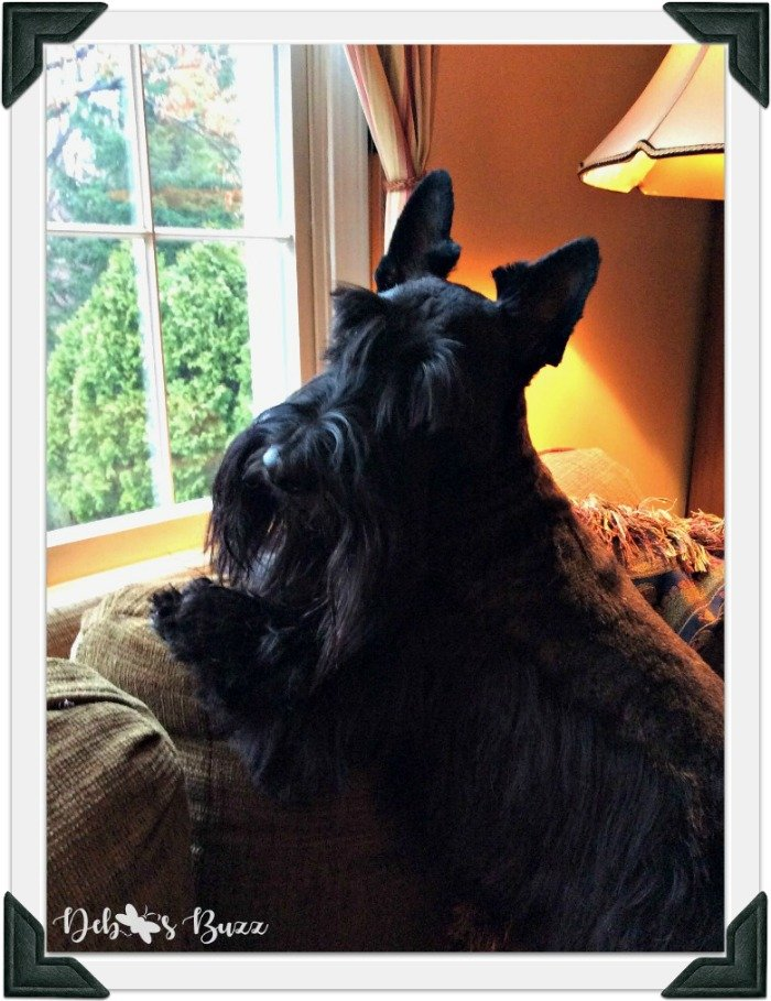 Scottie-dog-fuzzy-funny-Valentine-window-frame