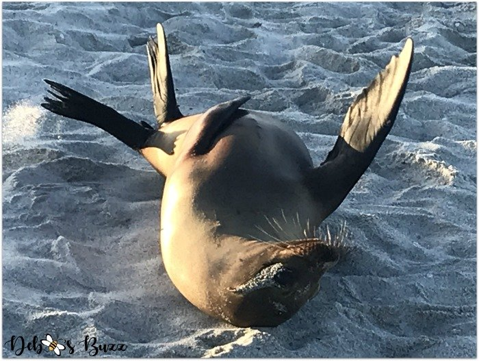 Galapagos-Islands-sea-lion-frolics