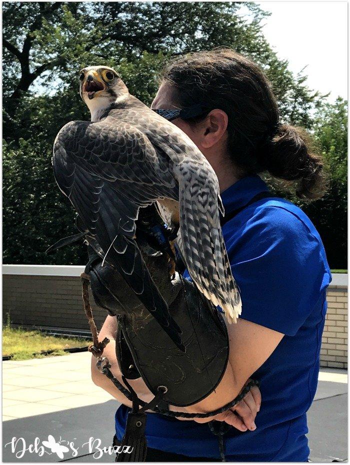 Pittsburgh-National-Aviary-falcon