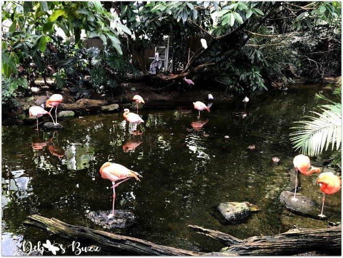 Pittsburgh-National-Aviary-flamingo-wetlands