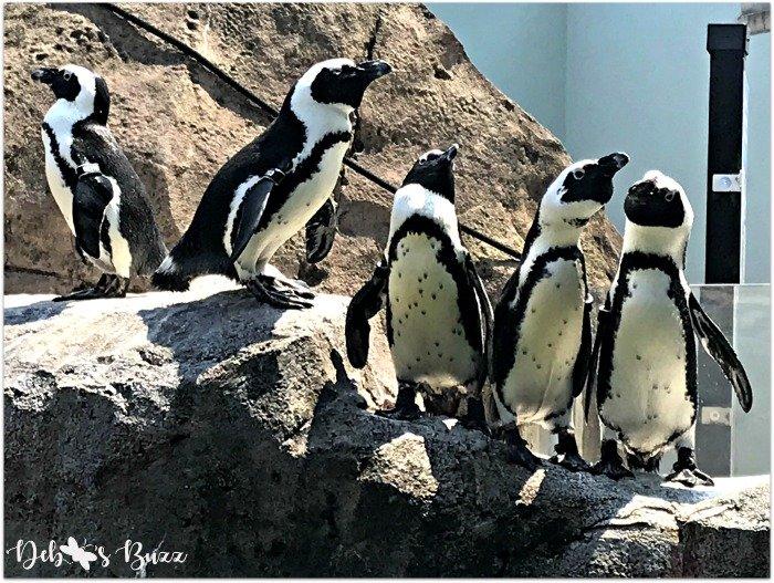 Pittsburgh-National-Aviary-penguin-lineup