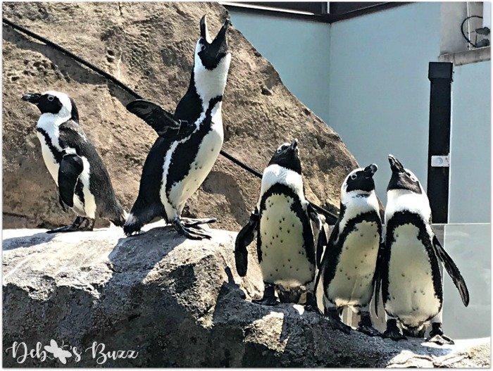 Pittsburgh-National-Aviary-penguin-yell