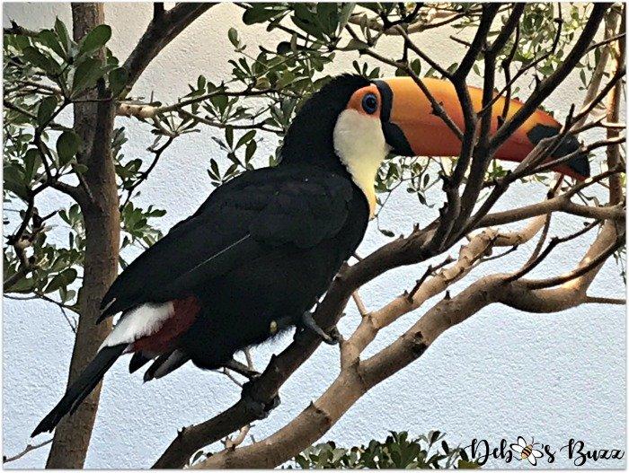 Pittsburgh-National-Aviary-toucan