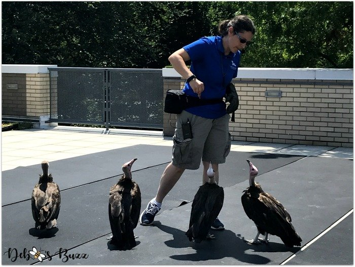 Pittsburgh-National-Aviary-vultures-Soar-show