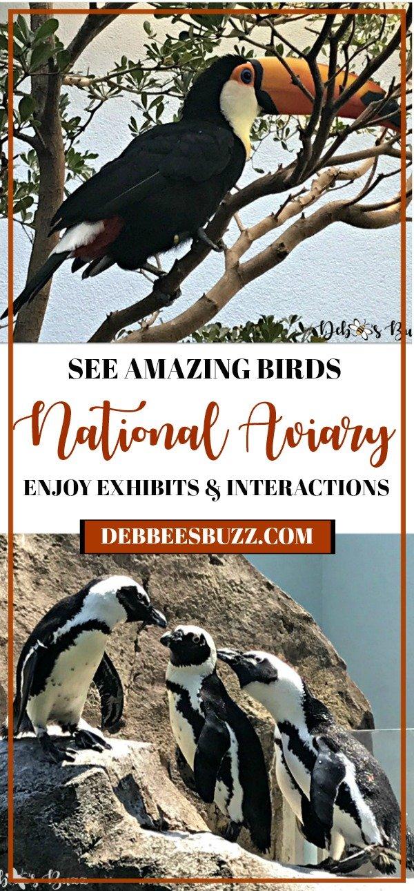 travel-Pittsburgh-National-Aviary-pin