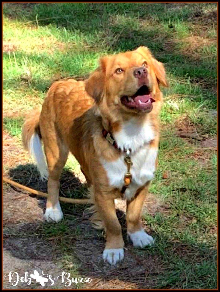 rescue-dog-Jack