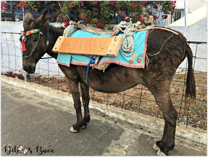 travel-Santorini-Greece-donkey