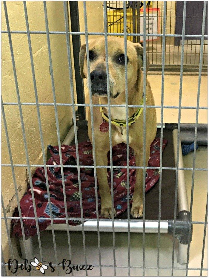 Animal-Friends-kennel-adoption