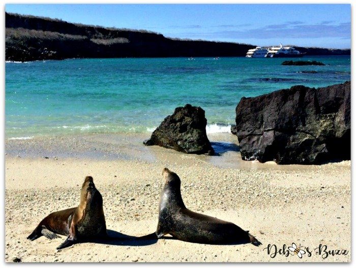Galapagos-Islands-cruise-Darwin-Bay-sea-lions