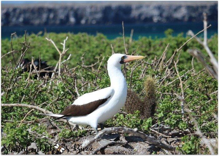 Galapagos-El-Barranco-nazca-bobbie