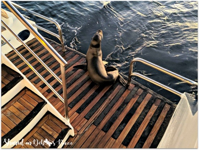 Galapagos-islands-cruise-sea-lion-stowaway