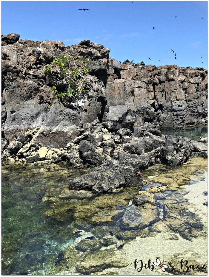 Galapagos-Genovesa-island-pond