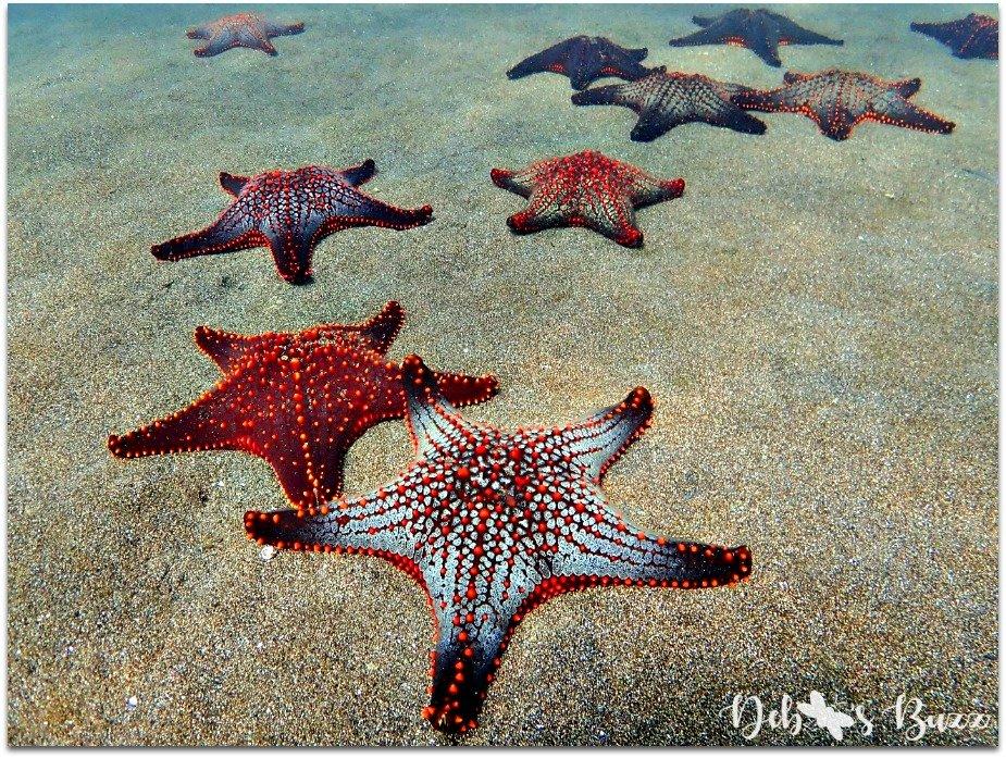 galapagos-Darwin- Bay-snorkel-starfish