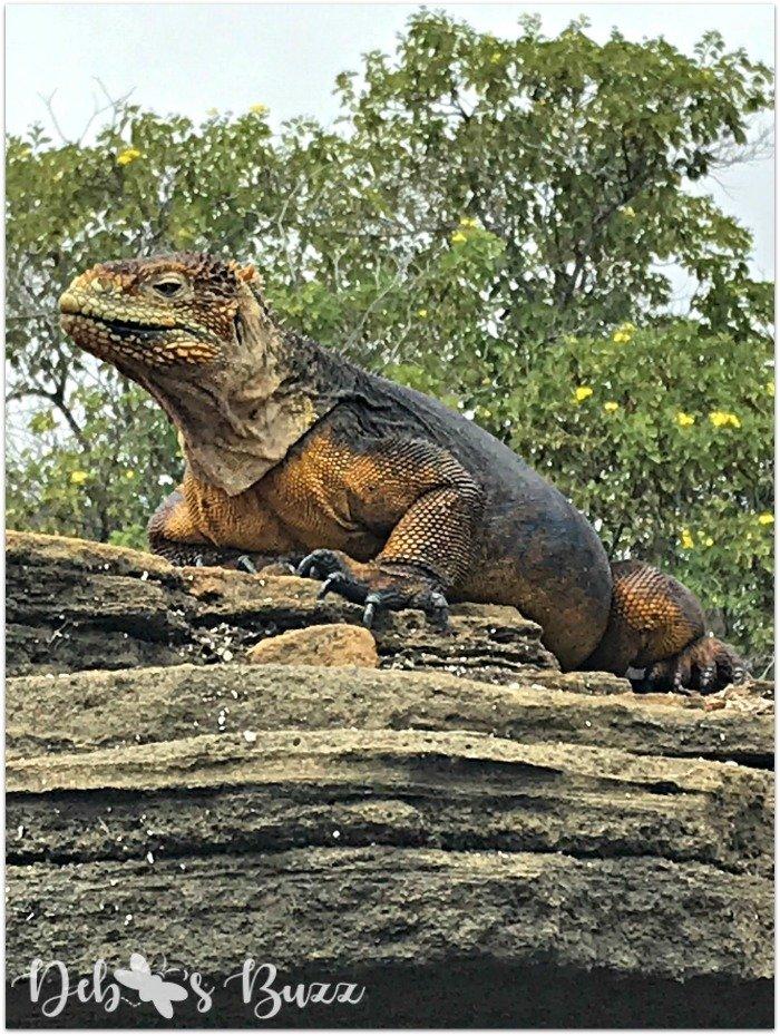 Galapagos-Egas-Port-marine-iguana