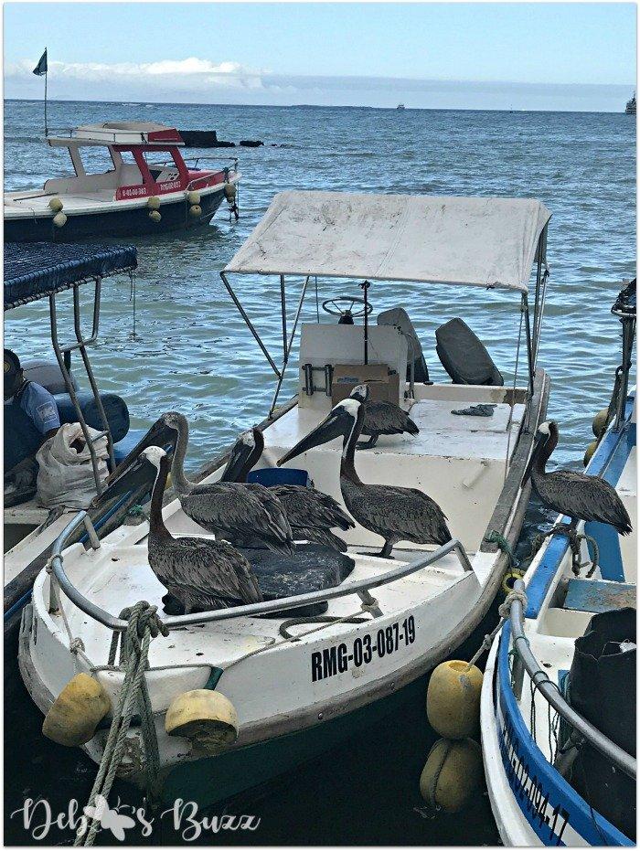 Galápagos-Santa-Cruz-Puerto-Ayora-pelican-beggars
