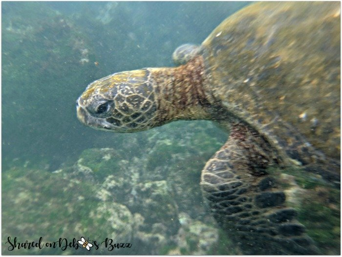 Galapagos-vacation-cruise-sea-turtle