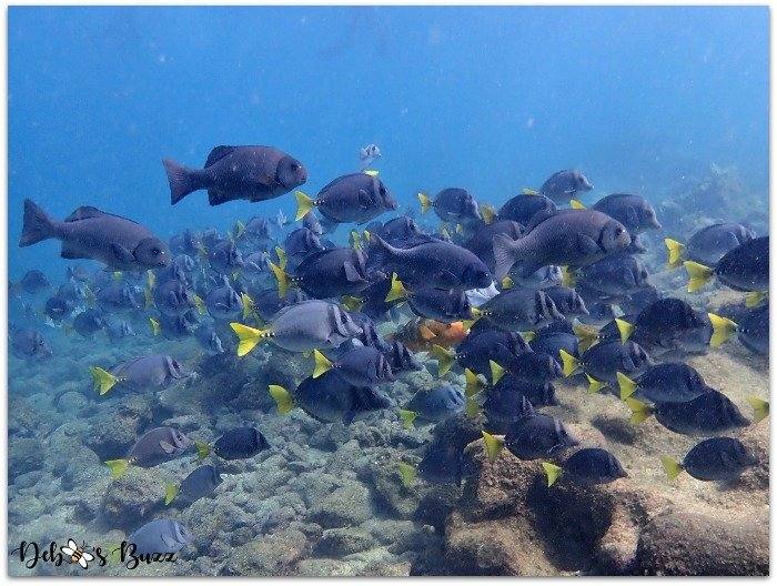 Galapagos-vacation-Buccaneer-Cove-snorkel-school