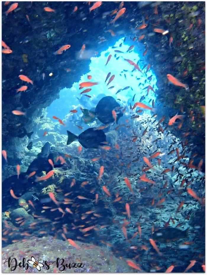 Galapagos-vacation-snorkel-Buccaneer-cove