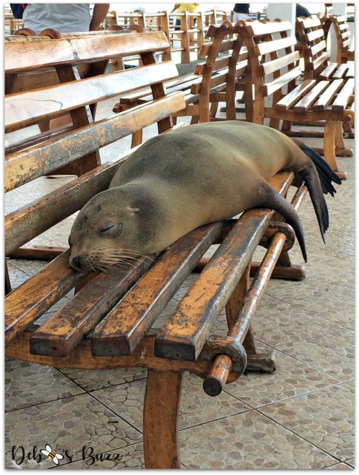 Galapagos-Santa-Cruz-seal-bench