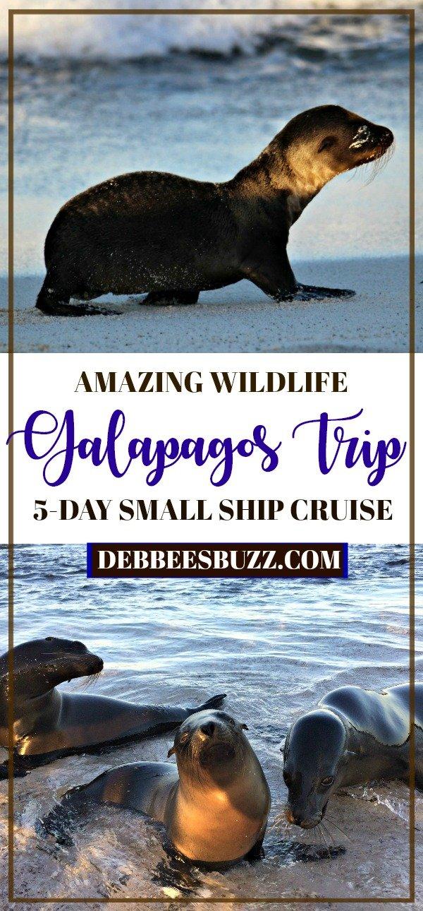 Galapagos-trip-cruise-vacation-sea-lions