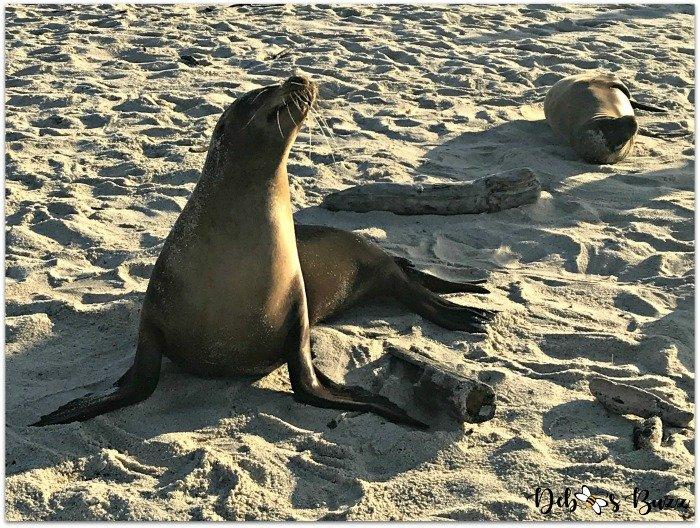 Galapagos-trip-sea-lion-basking