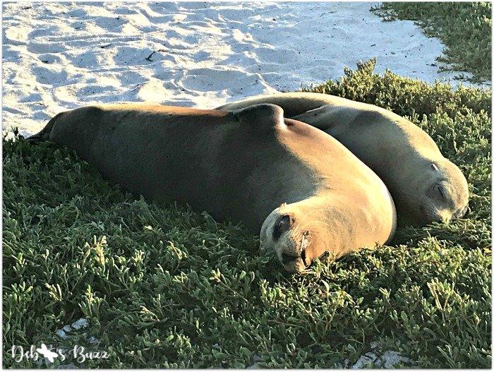 Galapagos-trip-sea-lion-nap
