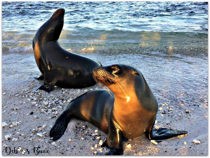 Galapagos-trip-sea-lion-pairpair