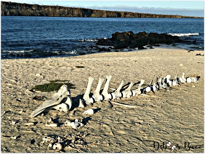 Galapagos-trip-whale-bones