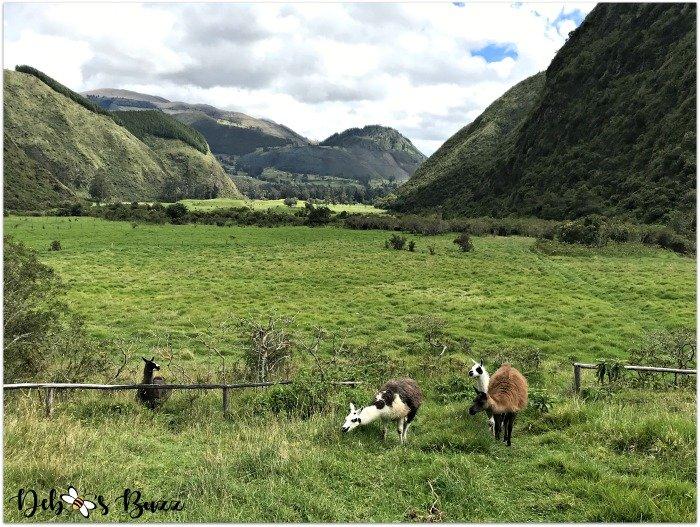 Ecuador-Andes-Mountain-valley-llama-view