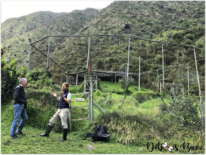Ecuador-Hacienda-vacation-Zuleta-Condor-conservation