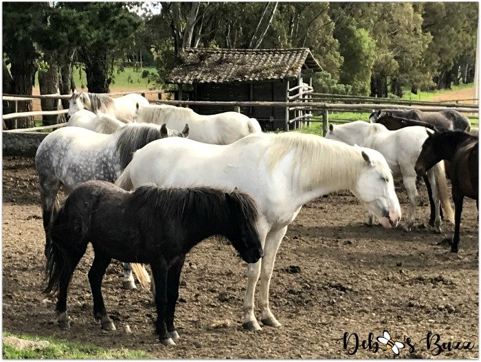 Hacienda-vacation-Zuleta-horses-Ecuador