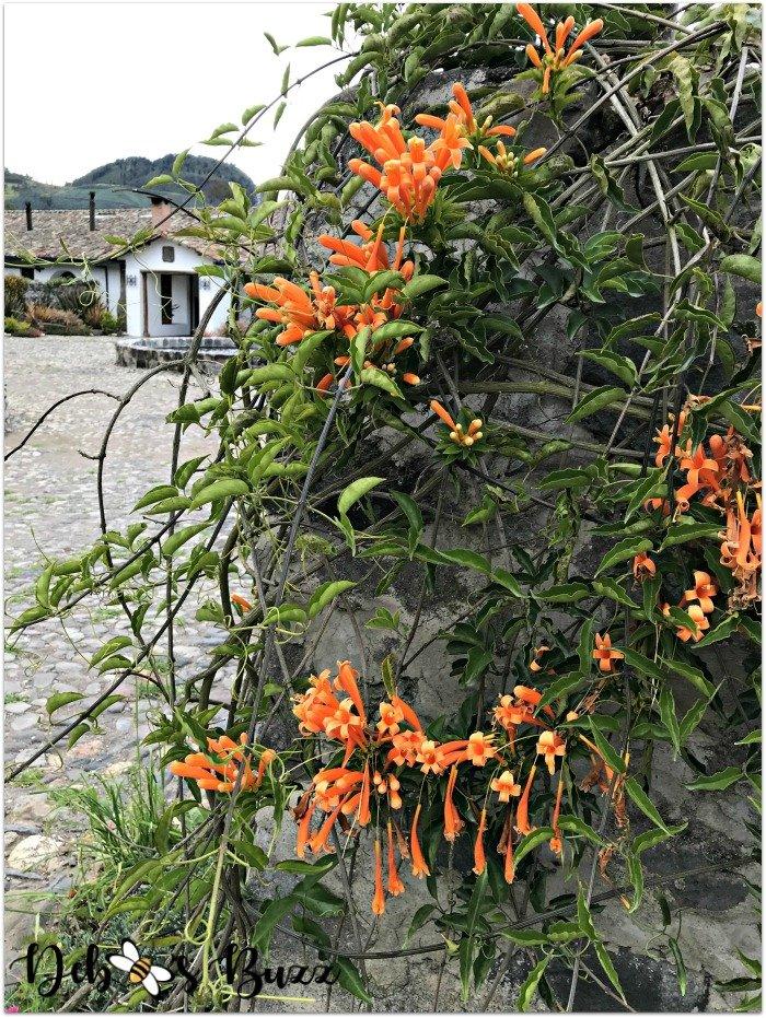 travel-Ecuador-Hacienda-Zuleta-flowers-blooming