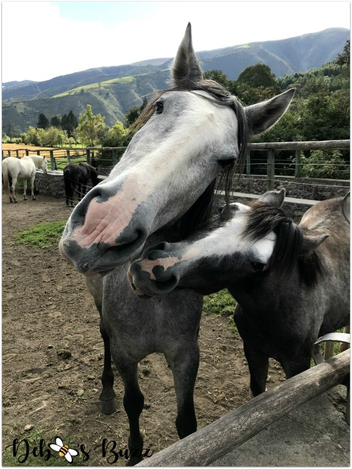 travel-Ecuador-Hacienda-Zuleta-horses-pair