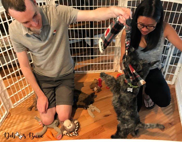 5-month-Scottie-puppy-playpen