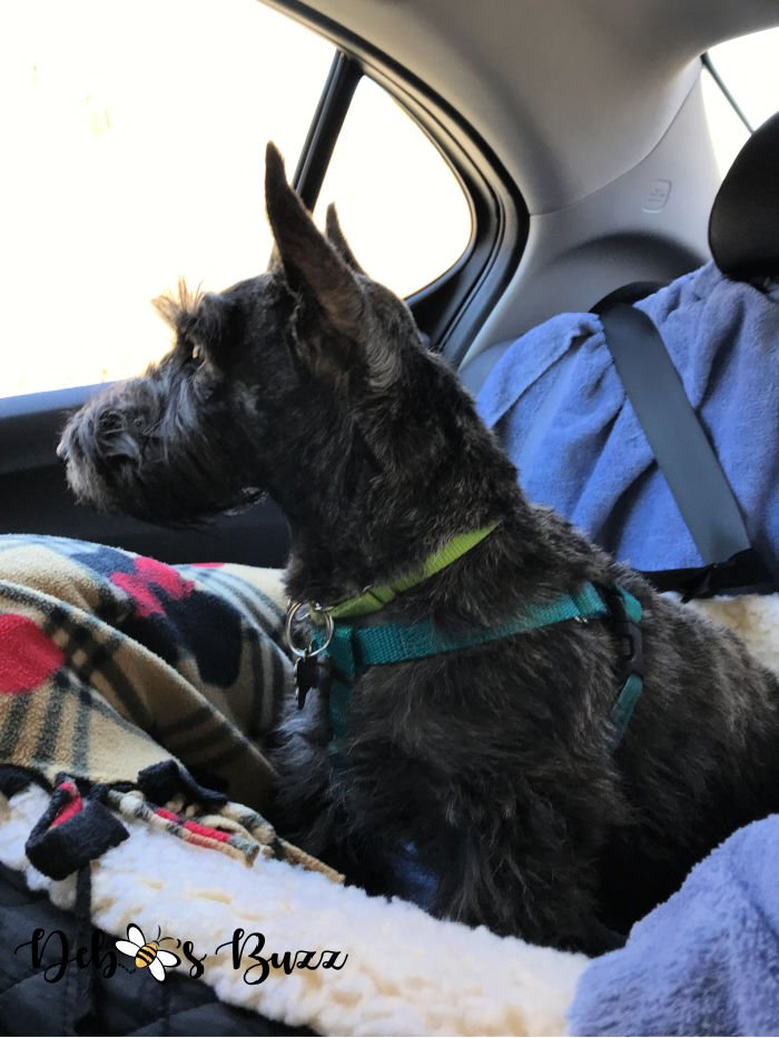 Scottie-dog-car-booster