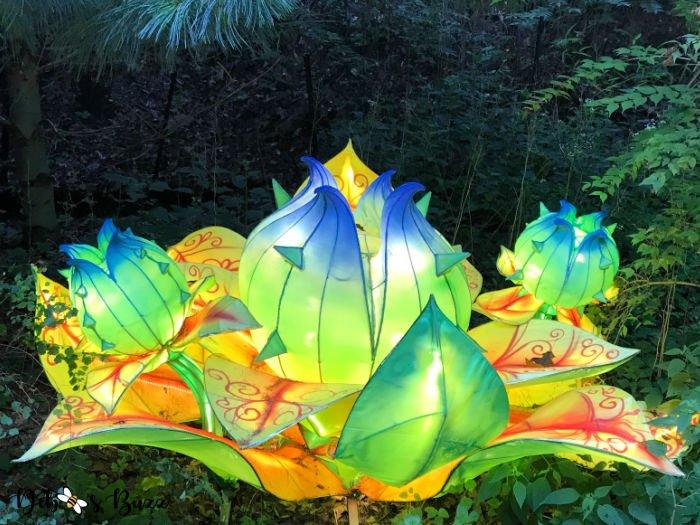 Asian-lantern-waterlily