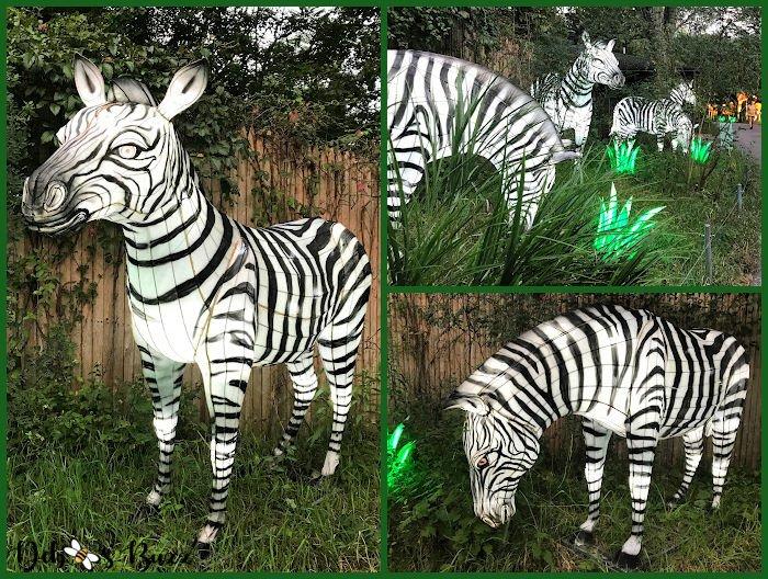 Asian-Lantern-Festival-Pittsburgh-Zoo-zebras