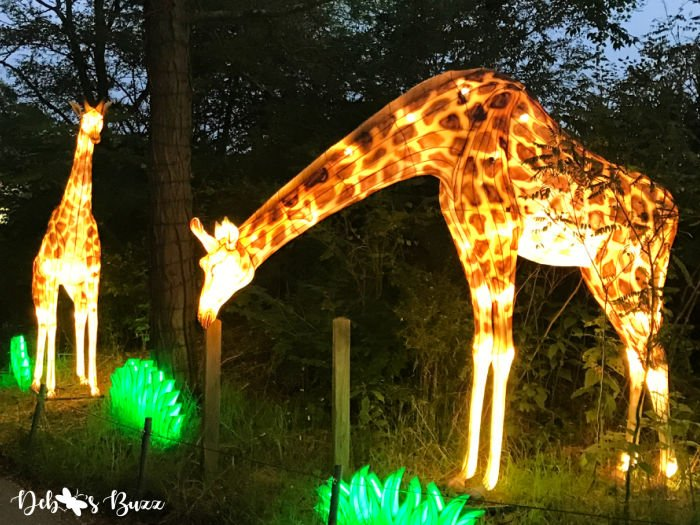 Pittsburgh-Zoo-Asian-giraffe-lanterns